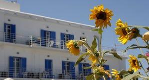 在旅馆前面的向日葵 免版税库存图片