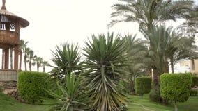 在旅馆的美丽的绿色植被和棕榈树 股票视频