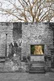 在无窗墙, Sukhothai,泰国后的一棵死的树 免版税库存照片