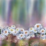 在无缝的布料的花卉模式 花束明亮的花照片向量 织品 库存照片