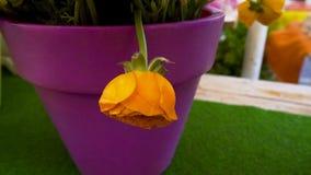 在无防御的花束的一朵黄色玫瑰花不同与所有,微弱和 免版税库存照片
