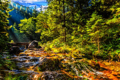 在日出光的山溪 库存图片