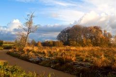 在日出光的秋天 免版税图库摄影