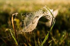 在日出光的蜘蛛网 库存图片