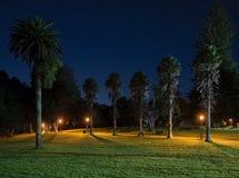 在日出前的公园 库存照片