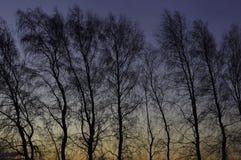 在日出前的树剪影 免版税库存图片