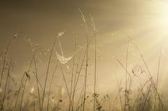 在日出和雾的高草秋天早晨 免版税库存图片