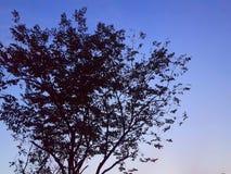 在日出天空的剪影树|黎明天空 库存照片