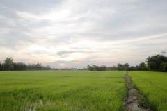 在日出天空的平安的米领域 图库摄影