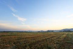 在日出天空背景的一个平安的米领域 库存图片