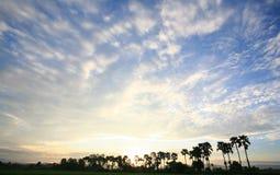 在日出天空背景的一个平安的米领域 免版税库存图片