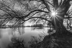 在日出时间的黑白树剪影 免版税库存照片