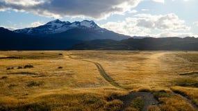 在日出期间的黄色草在托里斯在巴塔哥尼亚的del潘恩,智利 库存照片
