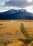 在日出期间的黄色草在托里斯在巴塔哥尼亚的del潘恩,智利 免版税库存照片