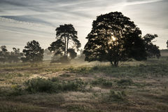 在日出期间的有薄雾的风景在英国乡下风景 免版税库存照片