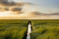 在日出期间的盐草甸 图库摄影
