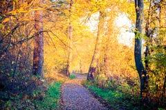 在日出柔光的步行道路 库存图片