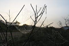 在日出的一个蜘蛛网 免版税库存照片