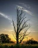 在日出的云彩风景 库存照片