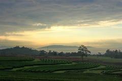 在日出的五颜六色的天空和geen茶领域 库存照片