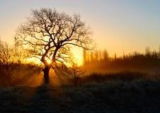 在日出的冬天树 免版税库存照片