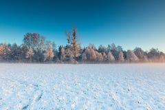 在日出的冬天领域 库存图片