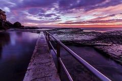 在日出的北部卷毛卷毛 图库摄影
