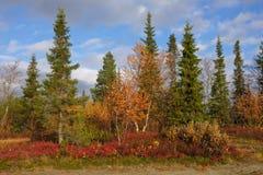 在日出的北taiga在秋天 库存图片