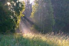 在日出的太阳` s光芒 免版税图库摄影