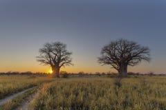 在日出的太阳starburst在贝恩斯猴面包树露营地 免版税库存图片