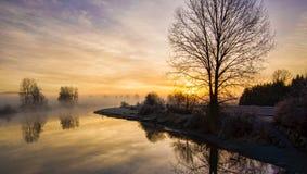 在日出的孤立不生叶的树与雾 免版税库存照片