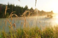 在日出的小尖峰 库存照片