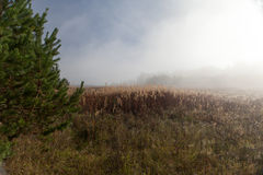 在日出的早晨雾在木头。 秋天横向 图库摄影
