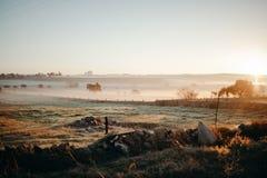 在日出的有薄雾的农村风景在西班牙12月,安大路西亚, 图库摄影