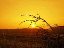 在日出的枝杈 免版税库存照片