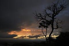 在日出的树剪影在巴西 免版税图库摄影