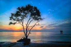 在日出的树 免版税库存照片