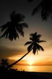 在日出的棕榈树剪影 免版税图库摄影