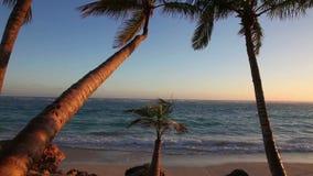 在日出的棕榈树 股票视频