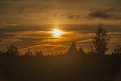 在日出的森林 免版税库存图片
