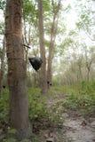 在日出的橡胶树在南泰国的薄雾 免版税图库摄影