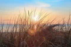 在日出的沙丘草在海滩 库存图片
