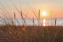 在日出的沙丘草在海滩 图库摄影