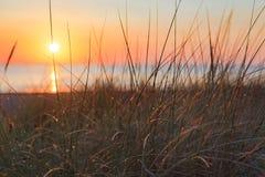 在日出的沙丘草在海滩 库存照片