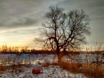 在日出的河树 免版税图库摄影