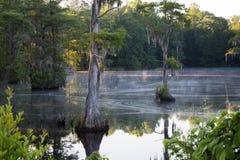 在日出的沼泽 免版税图库摄影
