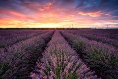 在日出的淡紫色领域 库存照片