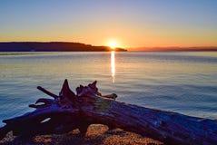在日出的漂流木头在点反抗公园的欧文海滩在华盛顿 免版税库存图片