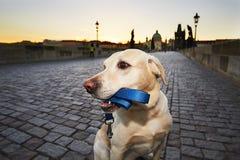 在日出的狗 免版税库存图片