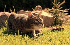 在日出的猫 免版税库存照片